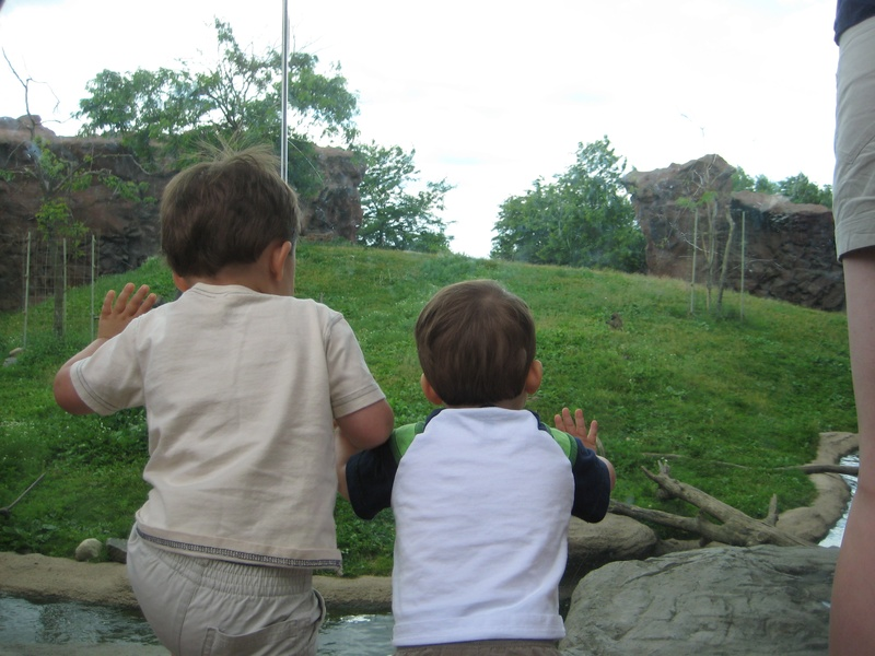Monkeys watching monkeys