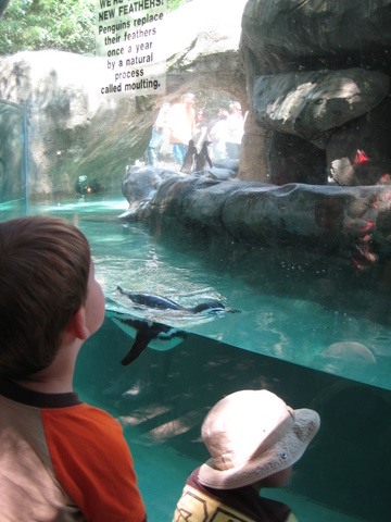 A great penguin exhibit with friendly penguins